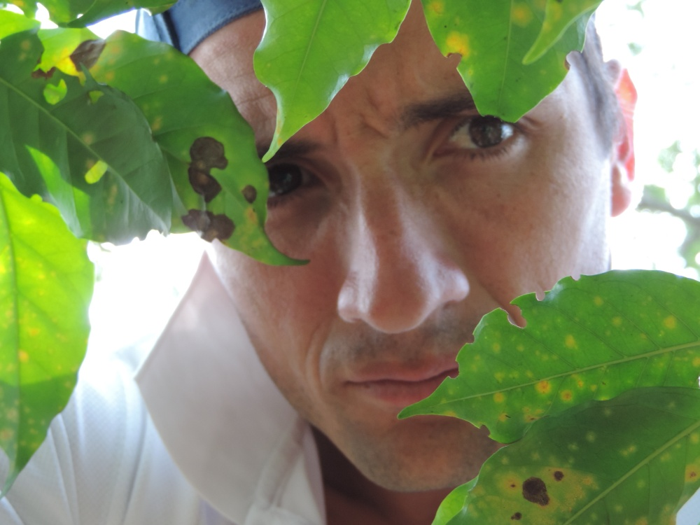Infección de Roya de Café (Hemileia vastratix) - Finca La Hilda, Costa Rica